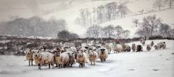 Colour Print Selector's MedalWinter Sheep in BlizzardLes Beardmore  Blythe Bridge CC