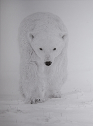 Mono Print MCPF RibbonPolar Bear StalkingMichael Windle  Smethwick PS